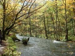 紅葉の奥入瀬渓流(青森県)