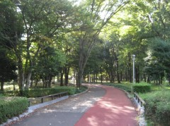 朝のジョギングコース(某公園)
