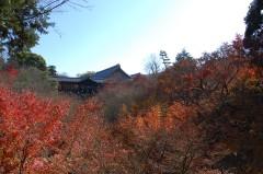 東福寺(紅葉)
