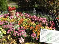 花一覧(季節とりどり)